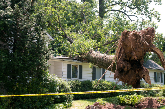 emergency tree removal houston