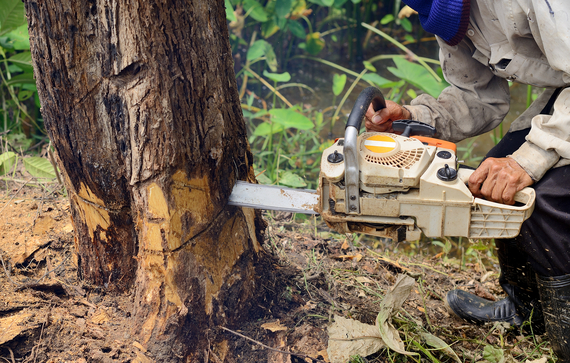 a man removing a tree with a chainsaw