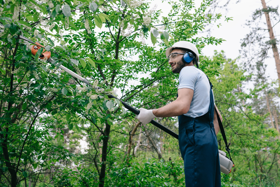 tree trimming katy tx